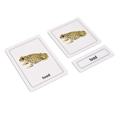 Amphibians 3 Part Cards (Plastic & Cut)