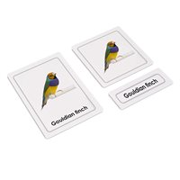 Birds 3 Part Cards (Plastic & Cut)