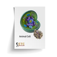 Animal Cell (Plastic & Cut)