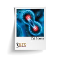 Cell Mitosis Card Stock