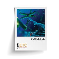 Cell Meiosis Card Stock