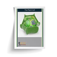 Plant Cell (Plastic & Cut)