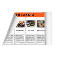 D- Animal Kingdom Charts (2 pc. kit) Laminate