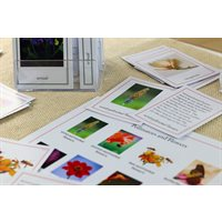 D- Upper Elementary Botany Nomenclature (2 pc. kit) Card Stock