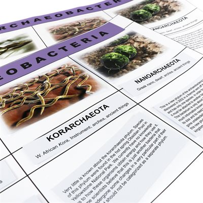 D- Archaeobacteria Kingdom Chart (2 pc. kit) Card Stock