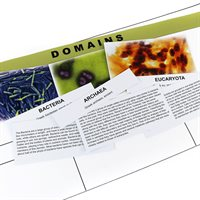 D- The Three Domains (2 pc. kit) Card Stock