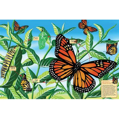 Butterfly Life Cycle Puzzle